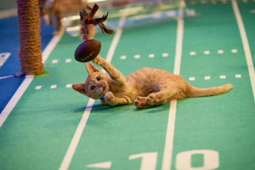 `Kitten Bowl` is a feline catstravaganza presented in association with North Shore Animal League America (the nation's largest no-kill shelter and animal adoption organization) and Last Hope Animal Rescue and Rehabilitation. It's hosted by Beth Stern, TV personality and national spokesperson for North Shore Animal League America. (Credit: ©2020 Crown Media United States LLC/Photographer: Marc Lemoine)