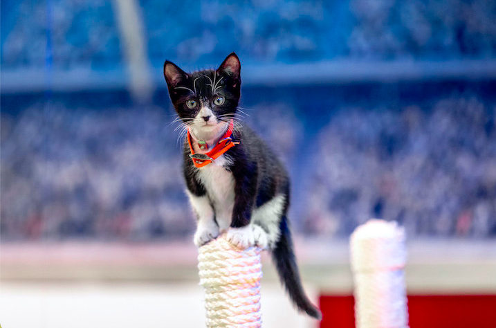 `Kitten Bowl VIII` (Credit: ©2021 Crown Media United States LLC/photographer: JJ Ignotz)