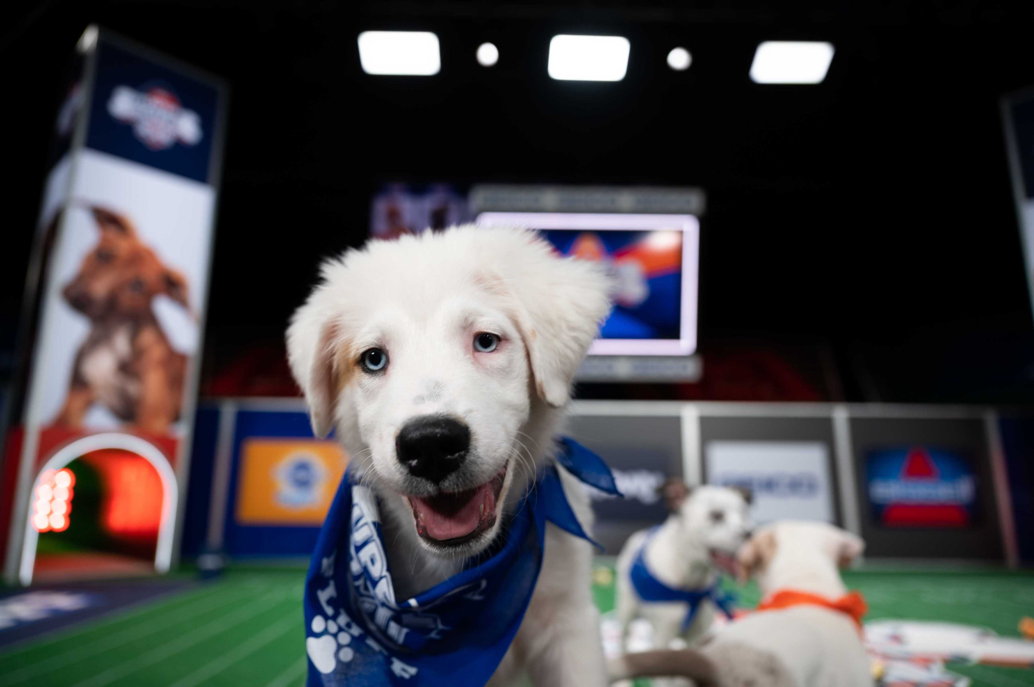 `Puppy Bowl XVII` (Images courtesy of Animal Planet)