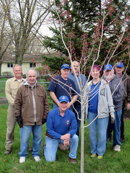 Youngstown Lions members, shown planting a new tree at `Lions Park` in the village. From left: Peter Grainge of Lawntree Landscaping, with Lions John MacArthur, Richard Allen (current club president), Stuart Comerford, Tim Lockhart, Millie Gibbs, Robert Gratz and Lonnie Gibbs. Click to enlarge.
