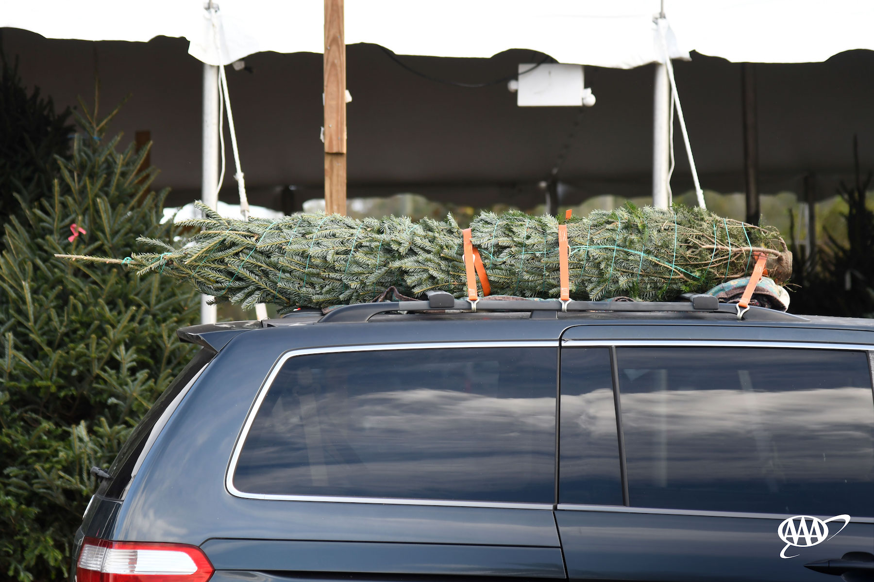 Properly secure your Christmas tree this year. (AAA photo)