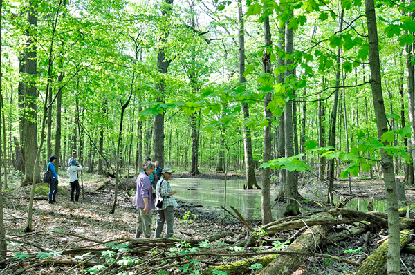 Visitors to a 140-acre parcel of forested land near Assumption Cemetery on Whitehaven Road view the property and its vast wetlands and forest landscapes. Funding committed by the Niagara River Greenway Ecological Standing Committee and the Gallogly Family Foundation will allow purchase of the property by the Western New York Land Conservancy.
