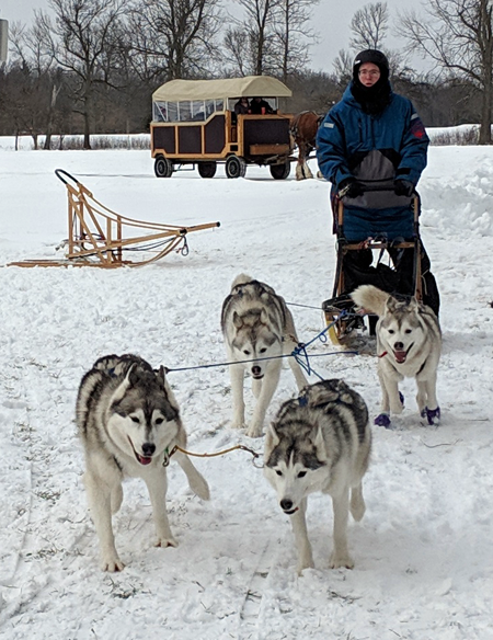 The Siberian Husky Club provided a rare glimpse of dog-sledding in Beaver Island State Park. (Photo by Mike Owen)