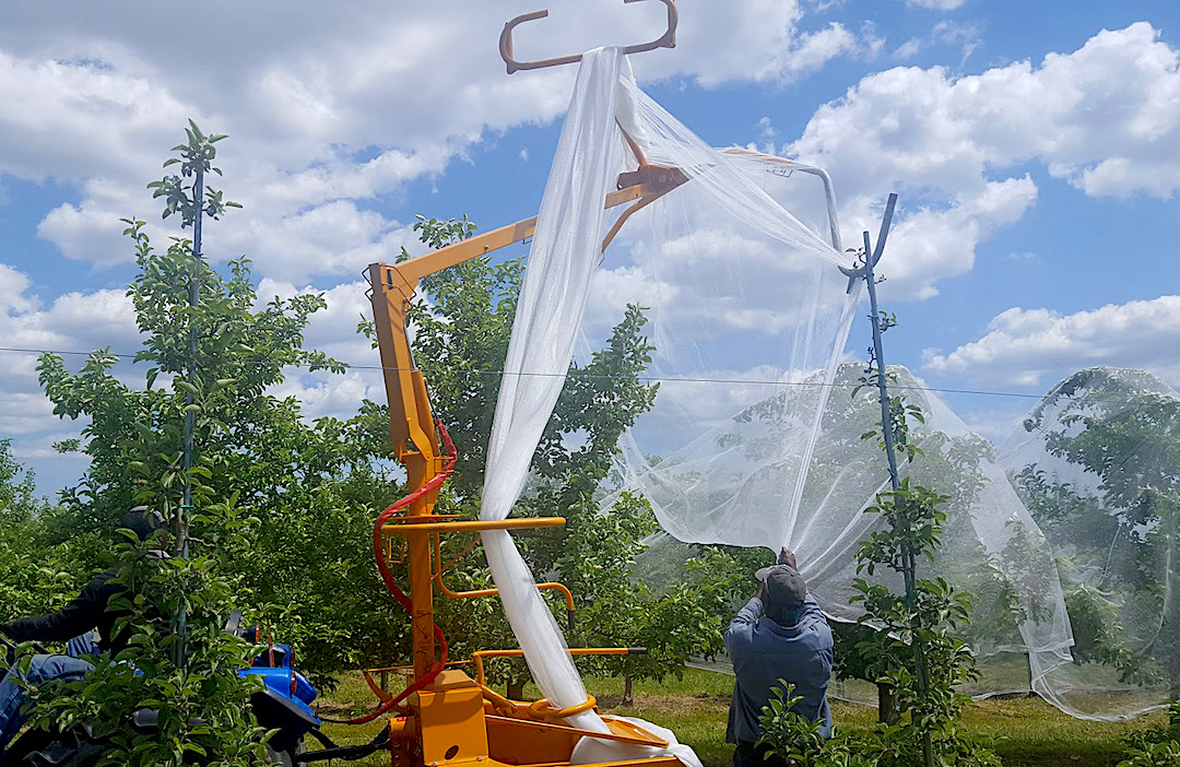 Employees at a Clinton County orchard install hail netting to a row of apple trees. (Photo: A. Galimberti, CCE Clinton County, New York)