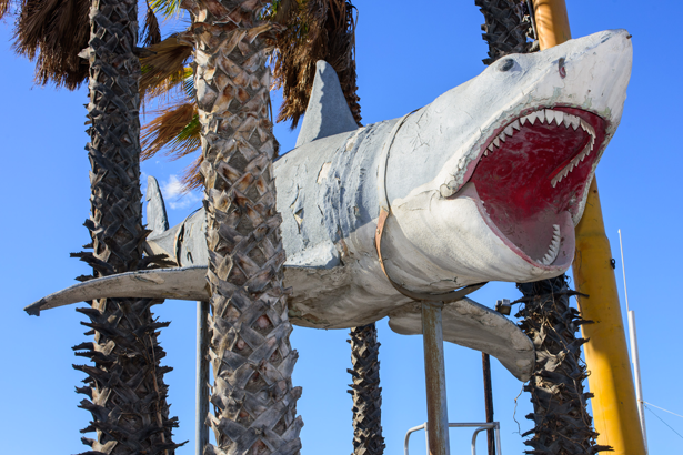 The Academy Museum accepted into its collection a major gift of the sole surviving full-scale model of the 1975 `Jaws` shark, donated by Nathan Adlen. (Contributed photo)