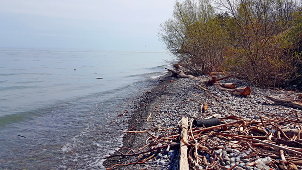 A debris-strewn shore near Porter on the Lake Park. Lake Ontario shore levels are currently more than three feet over December 2016 levels. (Photo by Terry Duffy)