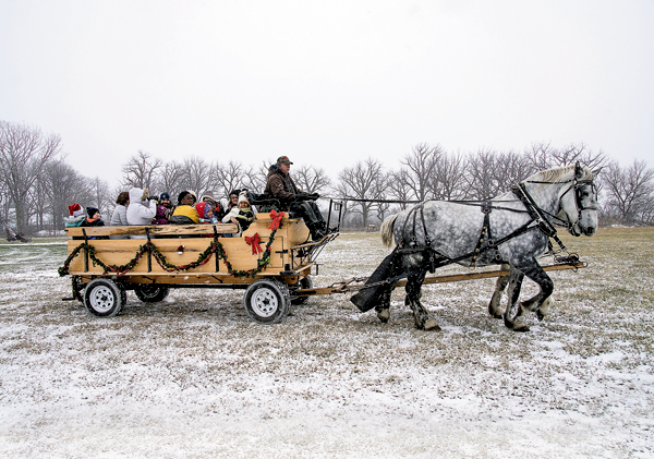 Family and friends enjoyed horse-drawn carriages in the snow at the Christmas at the Farm last weekend. (Photos by Wayne Peters)