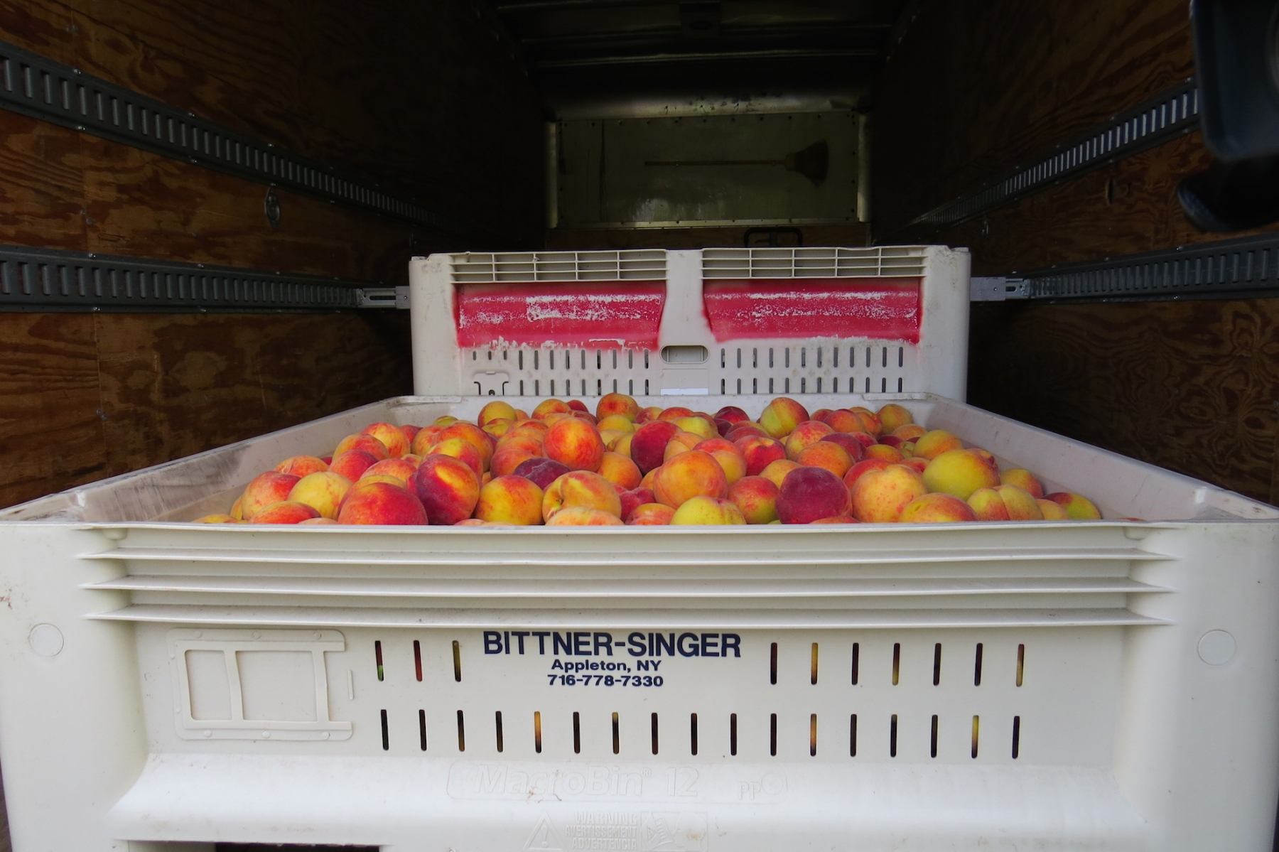 Peaches from Bittner Singer Farms.
