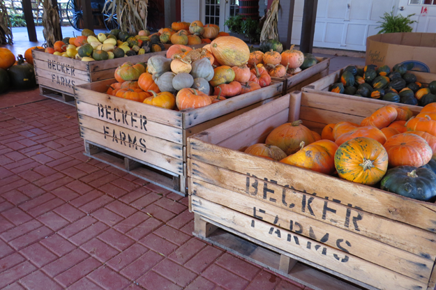 Becker Farms bins filled with pumpkins and gourds.