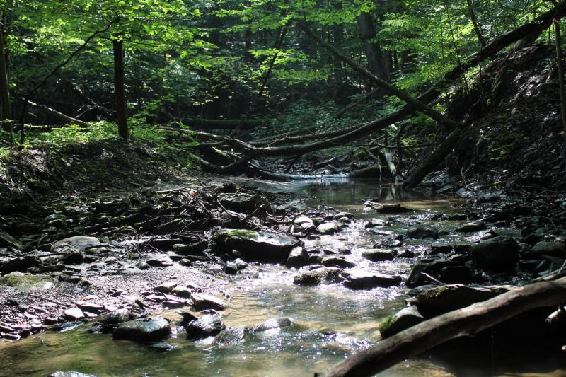 Riverkeeper: Headwater streams are critical for protecting water quality.