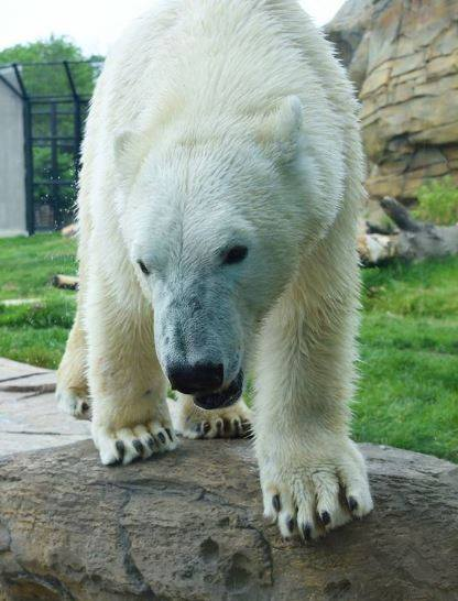 Sakari (Photo courtesy of Henry Vilas Zoo)
