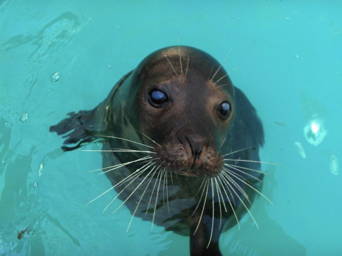 Aquarium Of Niagara Harbor Seals Take A Vacation