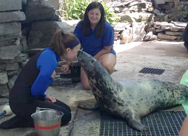 Trainer Hallie Schultz of the Aquarium of Niagara and Jill Burbank of the Indianapolis Zoo work with Pepper.