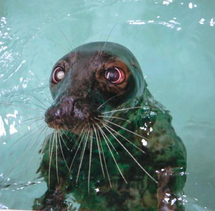 New Seal Medusa At Aquarium Of Niagara