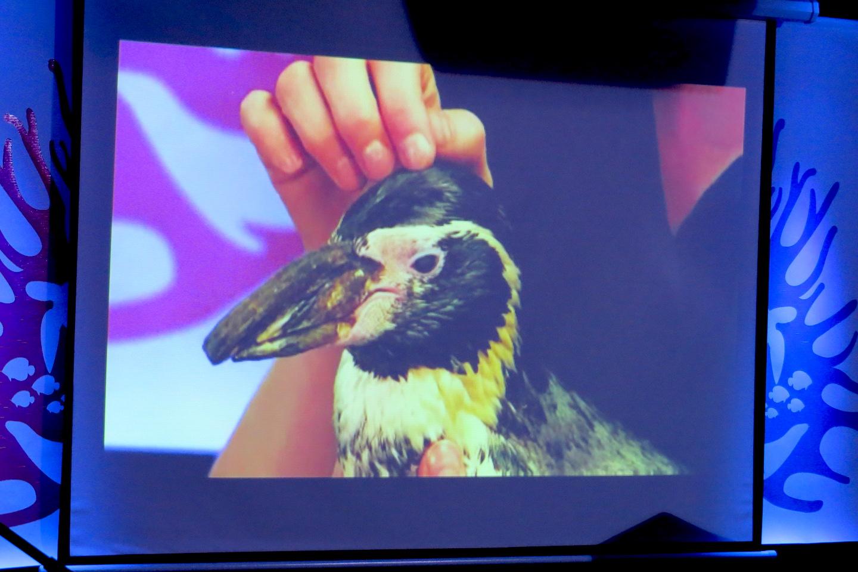Video Aquarium Of Niagara Asks Community To 39 Save Our