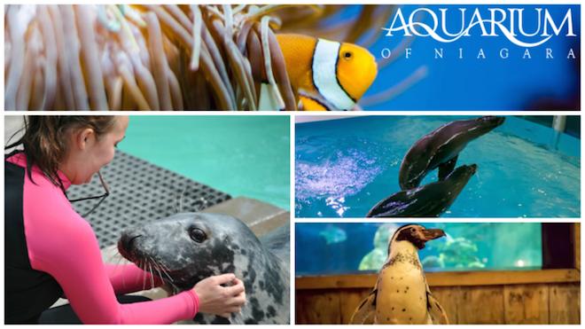 Aquarium Of Niagara Fundraiser This Weekend New Programs