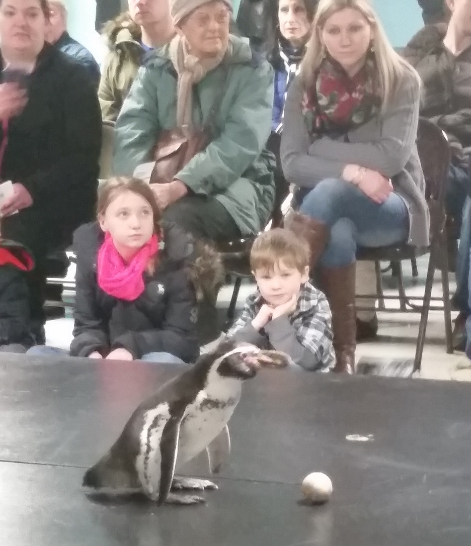 Penguins were on display at the recent Penguin Days at the Aquarium of Niagara. (Photo by Jamie Bacon)