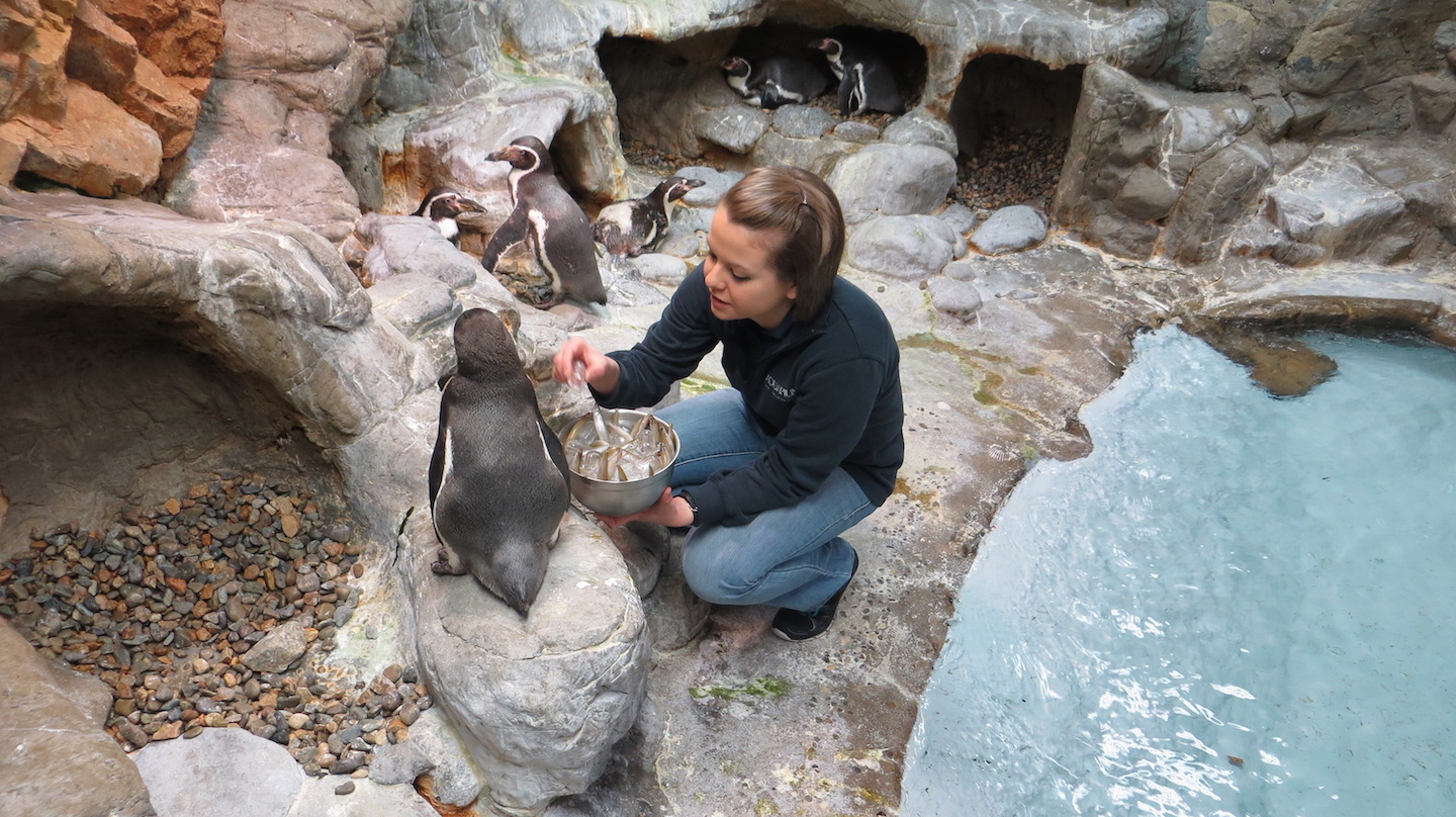 `Penguin Days` at the Aquarium of Niagara