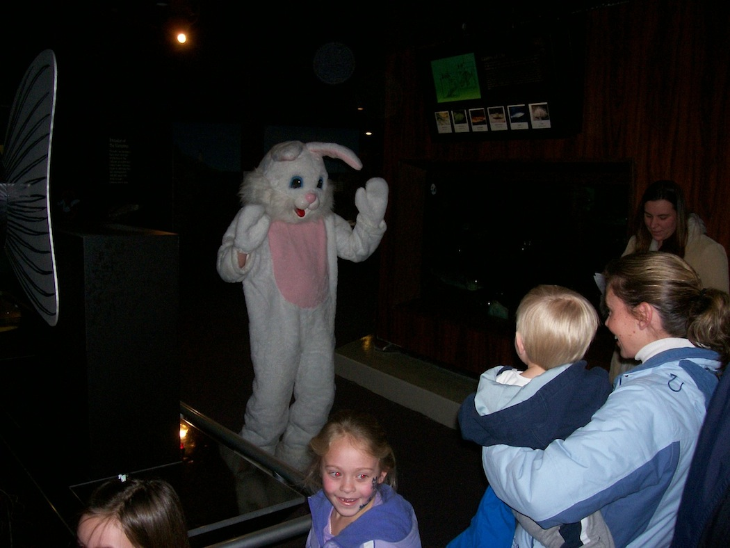 The `SEAster Bunny`