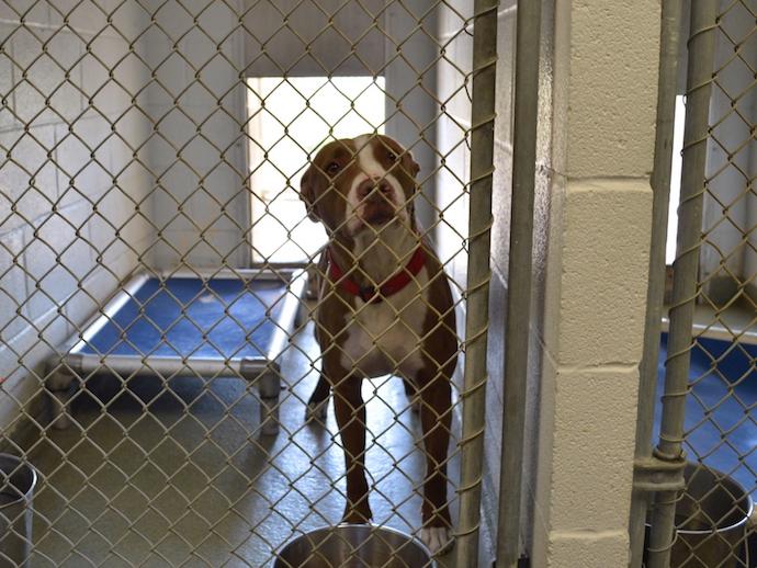 Dog meets world: Niagara SPCA finds new ways to introduce