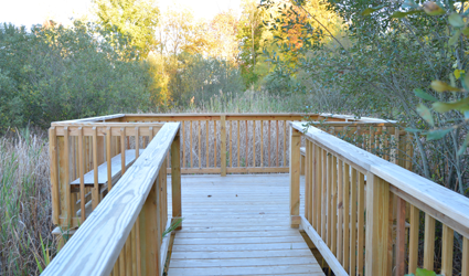 The Kimberly Woodruff Memorial Nature Trail features a handicapped-accessible observation deck, where visitors can view wetlands and wildlife.