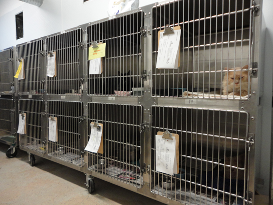 As the occupied cages suggest, the isolation room is already being used to treat sick cats.
