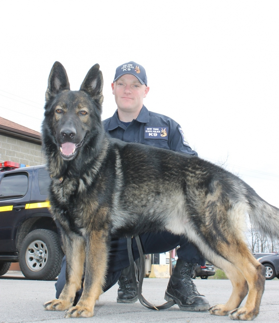 Trooper Sean Pierce is the handler for Dobber, a German shepherd named after the late Trooper Kevin Dobson. (photo by Larry Austin)