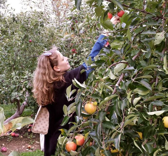 The writer picks apples at Becker Farms.