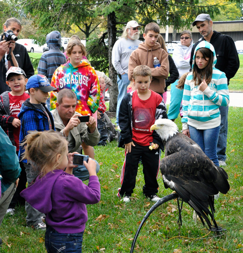 `Liberty the Bald Eagle` and other raptors such as a screech owl, peregrine, falcon and red tail hawk are among the featured live animals at the New York Power Authority's 28th annual Wildlife Festival on Saturday and Sunday, Sept. 28-29. `Liberty` appears with the popular Paul Schnell from the Institute for Environmental Learning, who has participated in the festival since it began in 1985. (New York Power Authority photo)