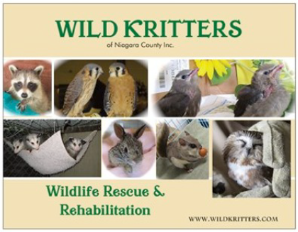 Wild Kritters of Niagara County Inc., an organization that cares for injured and orphaned wildlife, hosts its seventh annual basket raffle Sunday, April 21.