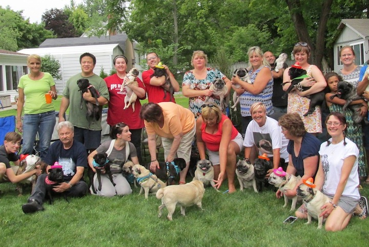 Recently, a grumble of 24 pugs and their owners came together for a `dawg on` summer pug party in Youngstown. Dog owners from Lewiston, Youngstown, Clarence, Lancaster and Amherst attended the event.