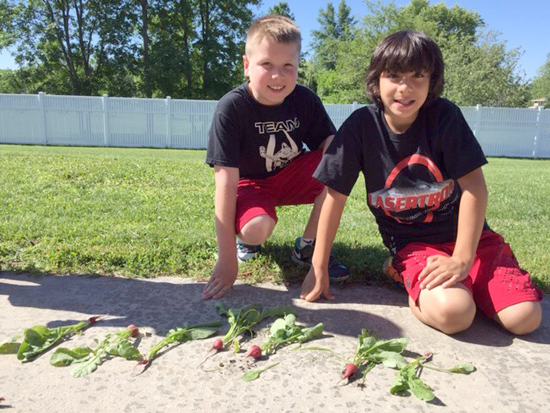 Joey Muni and Anthony LaGreca show off their radishes at the Rainbow Garden at Errick Road Elementary School. (Contributed photos)