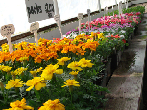 At Treichler's you can find everything from mums, annuals, perennials, hanging baskets, vegetable plants, shrubs, seeds and decorative items from your garden.